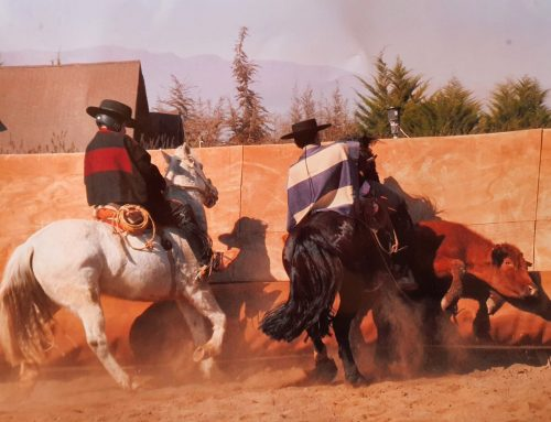 ¡Regreso de nuestros becados a la temporada de Rodeos y Clasificatorias!